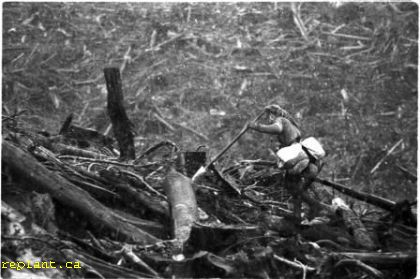 treeplanter-in-heavy-slash-24